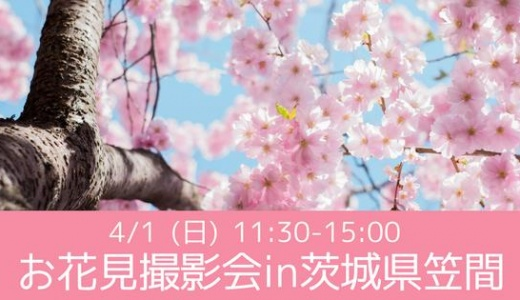 4/1(日)11:30-15:00 お花見撮影会in茨城県笠間